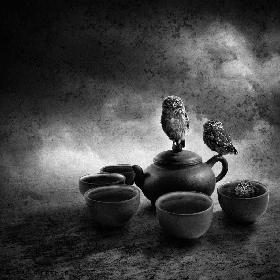 immagini-fotografia-surreale-bianco-e-nero-animali-ibridi-sarah-deremer-07