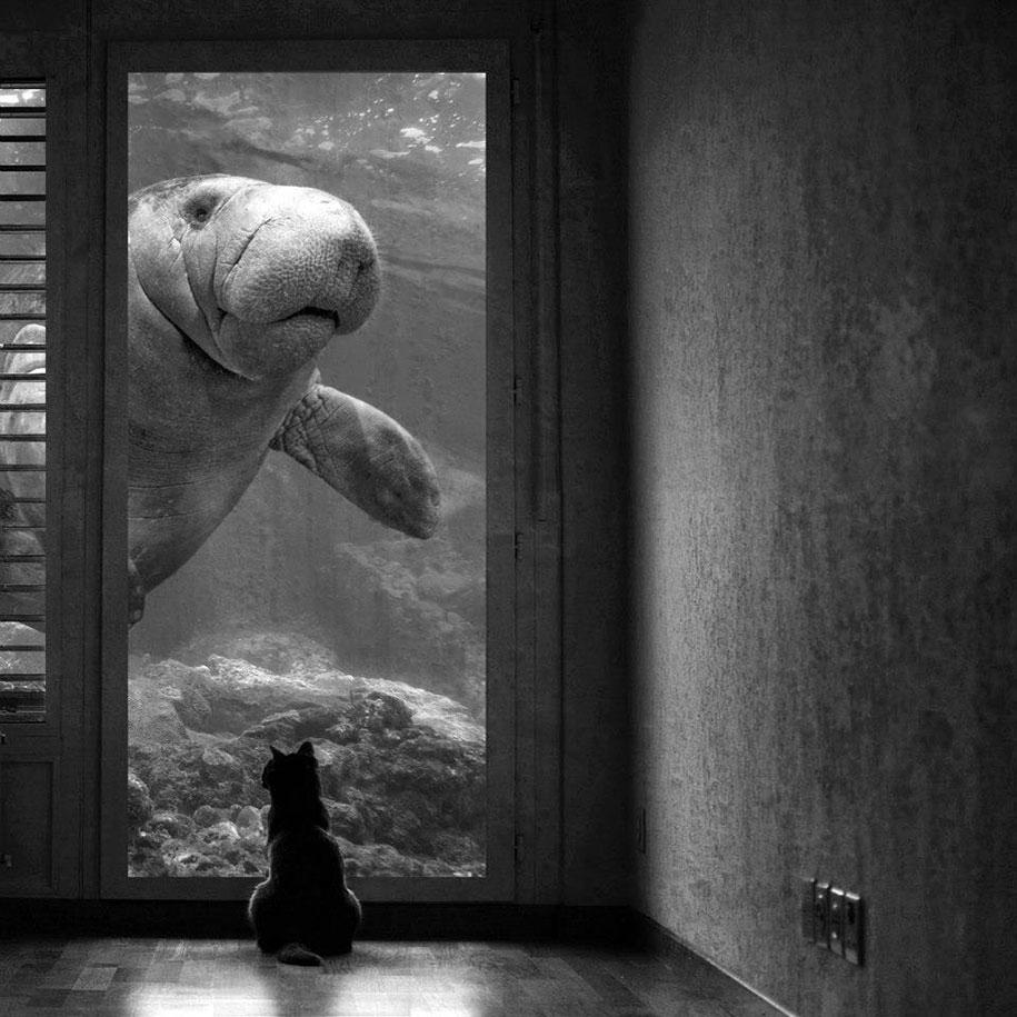 immagini-fotografia-surreale-bianco-e-nero-animali-ibridi-sarah-deremer-08