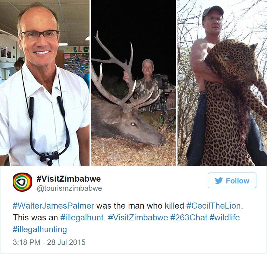 leone-ucciso-caccia-illegale-cecil-walter-palmer-dentista-05