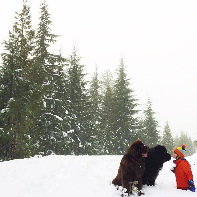 mamma-fotografa-figlio-cani-cavallo-amicizia-stasha-becker-01