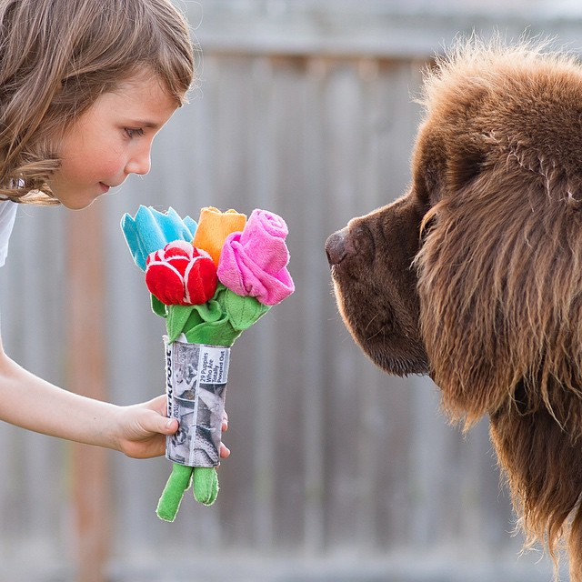mamma-fotografa-figlio-cani-cavallo-amicizia-stasha-becker-02