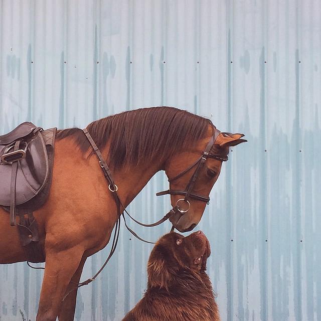 mamma-fotografa-figlio-cani-cavallo-amicizia-stasha-becker-03