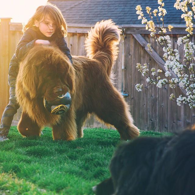 mamma-fotografa-figlio-cani-cavallo-amicizia-stasha-becker-04