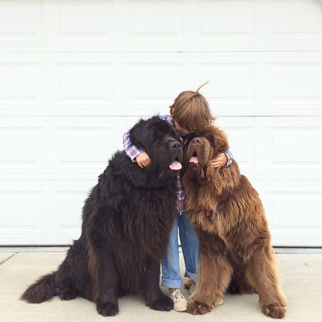 mamma-fotografa-figlio-cani-cavallo-amicizia-stasha-becker-06