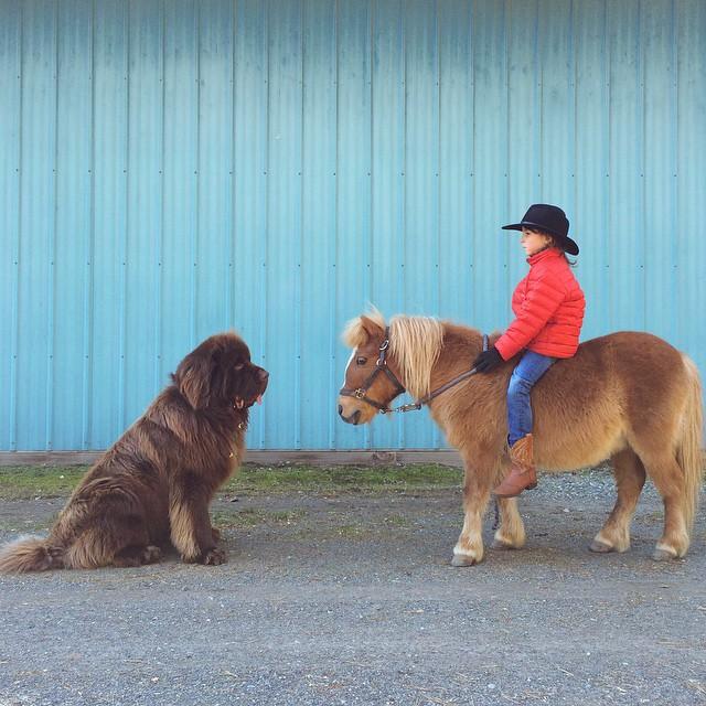 mamma-fotografa-figlio-cani-cavallo-amicizia-stasha-becker-08