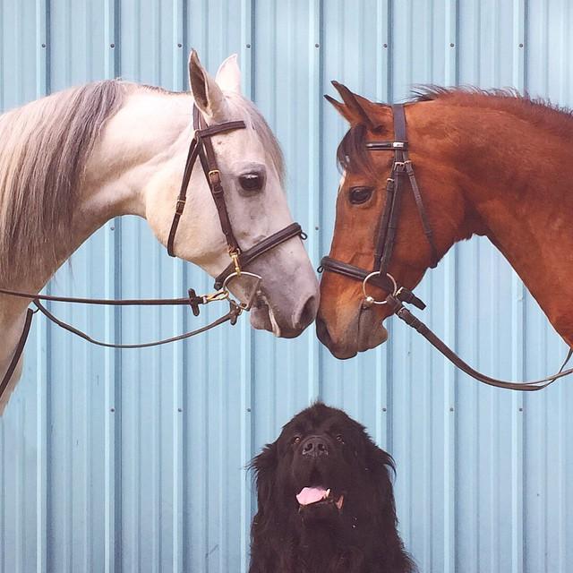 mamma-fotografa-figlio-cani-cavallo-amicizia-stasha-becker-09