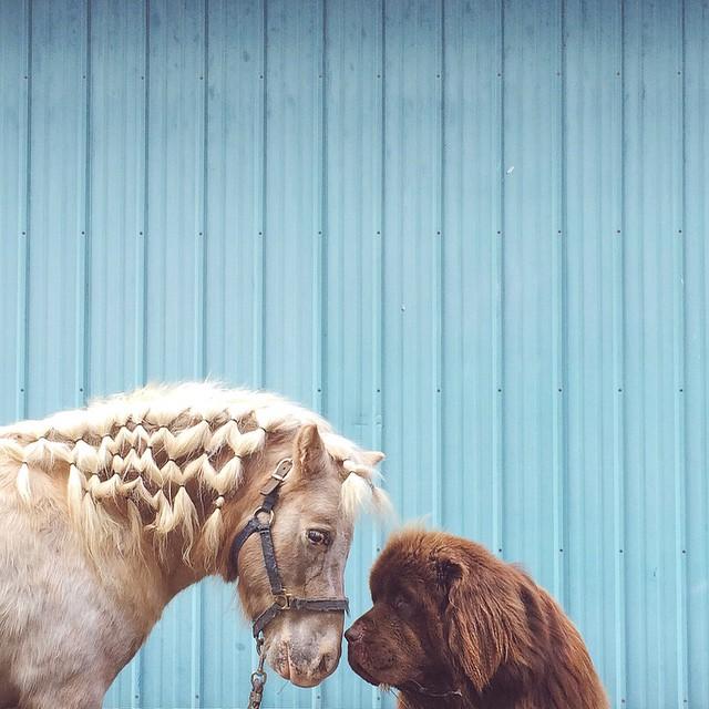 mamma-fotografa-figlio-cani-cavallo-amicizia-stasha-becker-10