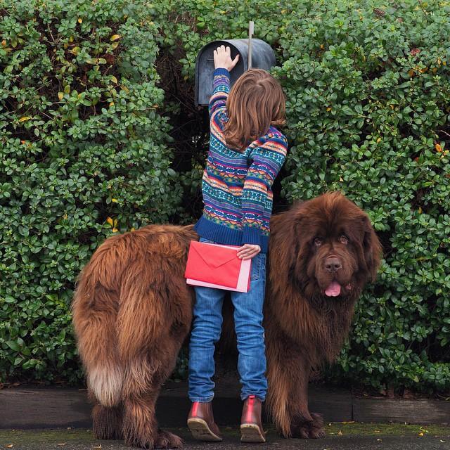 mamma-fotografa-figlio-cani-cavallo-amicizia-stasha-becker-11