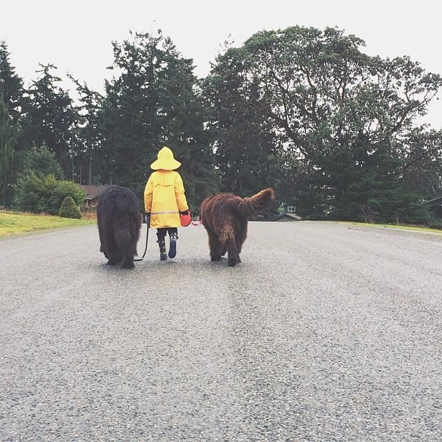 mamma-fotografa-figlio-cani-cavallo-amicizia-stasha-becker-13