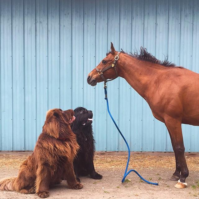 mamma-fotografa-figlio-cani-cavallo-amicizia-stasha-becker-15