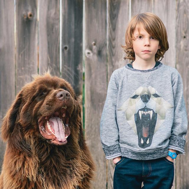 mamma-fotografa-figlio-cani-cavallo-amicizia-stasha-becker-16