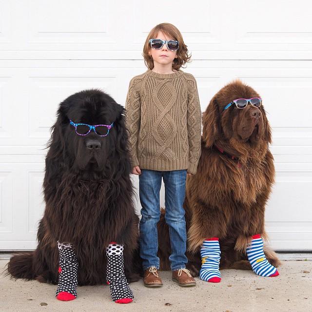 mamma-fotografa-figlio-cani-cavallo-amicizia-stasha-becker-17