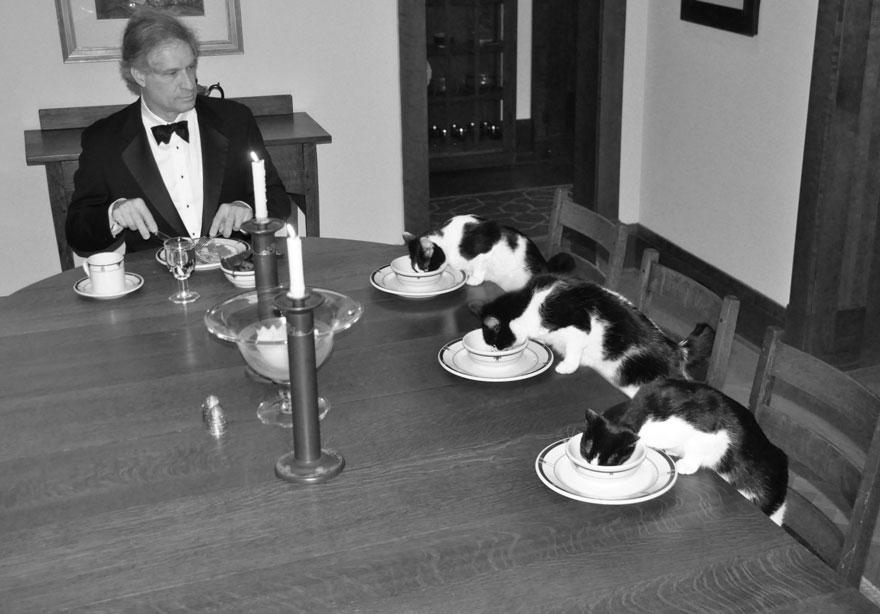 marito-organizza-scherzo-moglie-cena-elegante-con-gatti1