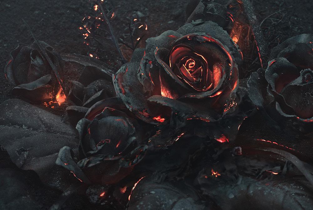 mazzo-di-rose-bruciate-fotografia-ars-thanea-2