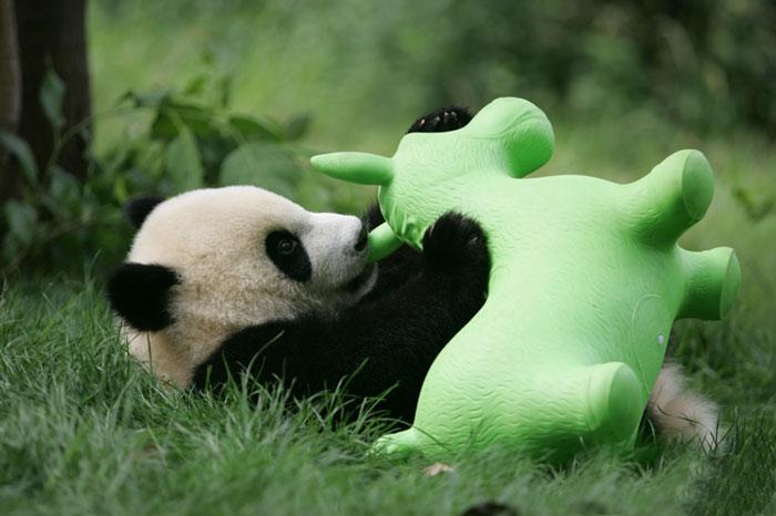 panda-cuccioli-asilo-nido-centro-ricerca-allevamento-Chengdu-cina-14