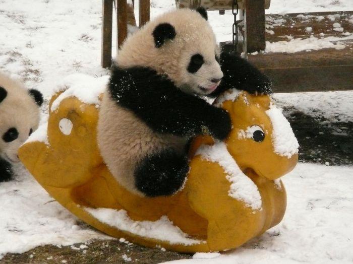 panda-cuccioli-asilo-nido-centro-ricerca-allevamento-Chengdu-cina-17