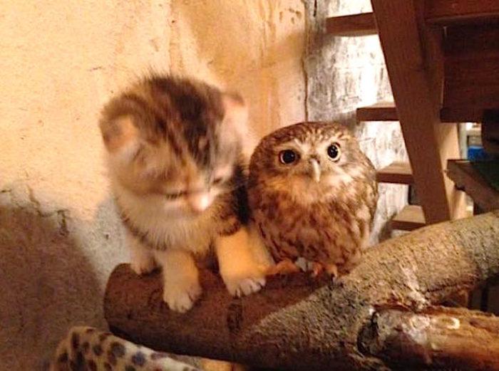 piccolo-gufo-gattino-amicizia-5