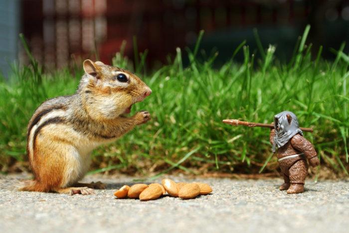 scoiattoli-giocano-con-statuine-star-wars-fotografia-chris-mcveigh-1