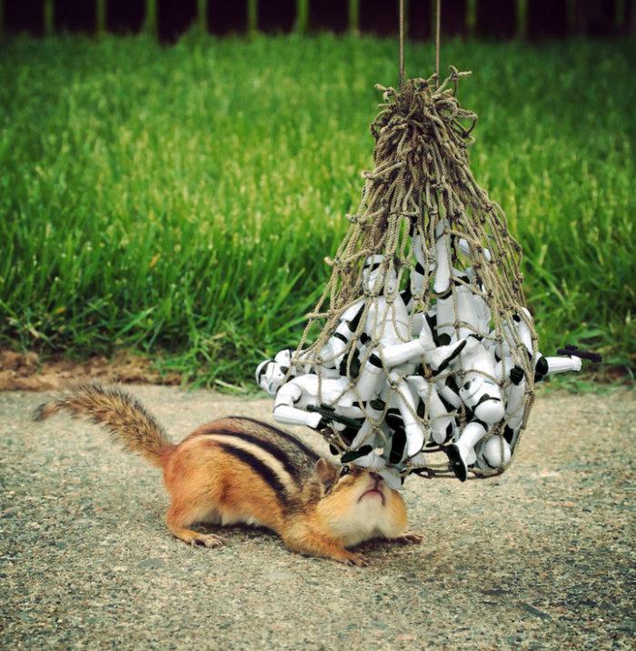 scoiattoli-giocano-con-statuine-star-wars-fotografia-chris-mcveigh-2