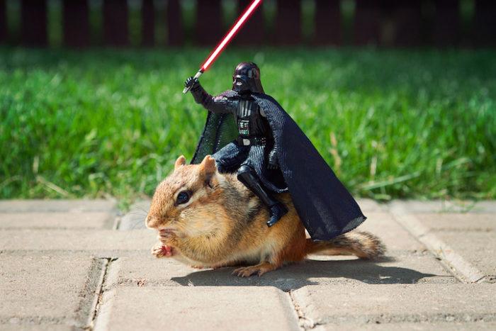 scoiattoli-giocano-con-statuine-star-wars-fotografia-chris-mcveigh-3