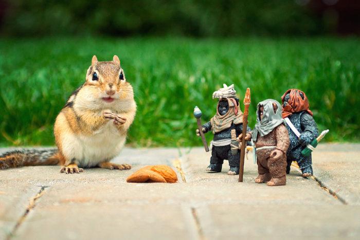 scoiattoli-giocano-con-statuine-star-wars-fotografia-chris-mcveigh-4