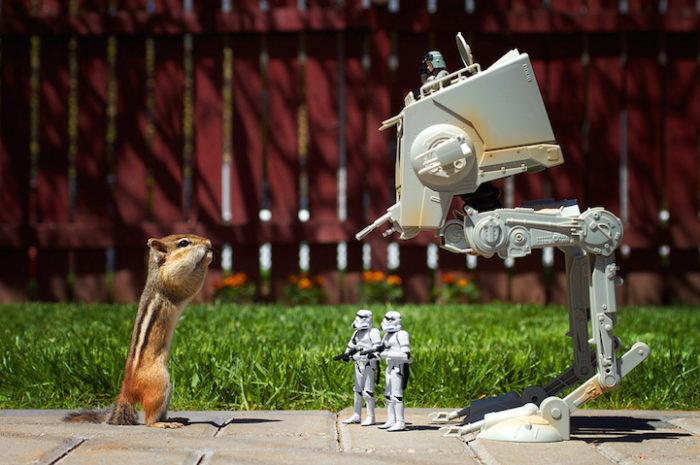 scoiattoli-giocano-con-statuine-star-wars-fotografia-chris-mcveigh-5