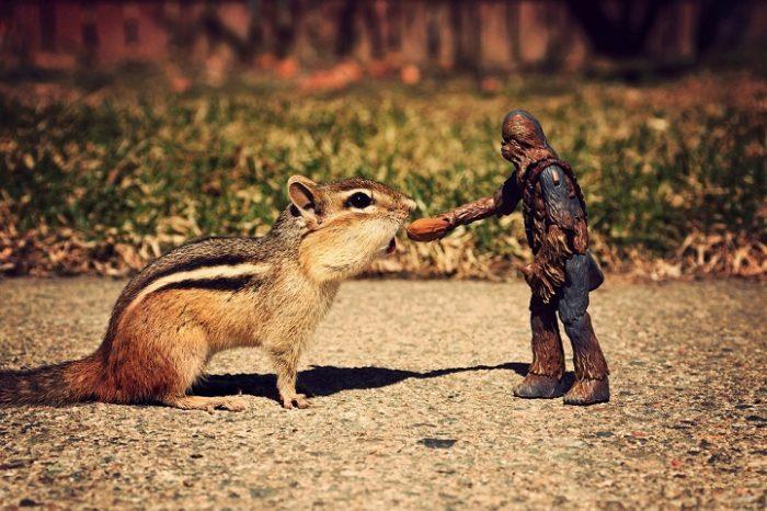 scoiattoli-giocano-con-statuine-star-wars-fotografia-chris-mcveigh-6