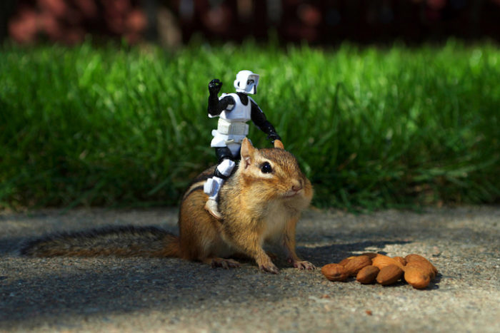 scoiattoli-giocano-con-statuine-star-wars-fotografia-chris-mcveigh-7