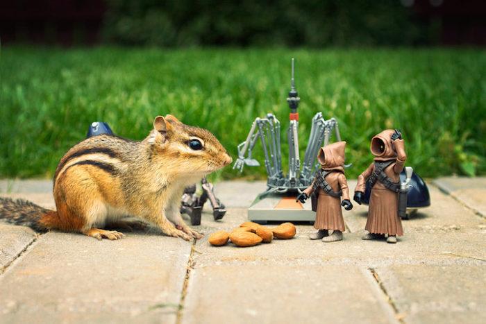 scoiattoli-giocano-con-statuine-star-wars-fotografia-chris-mcveigh-9