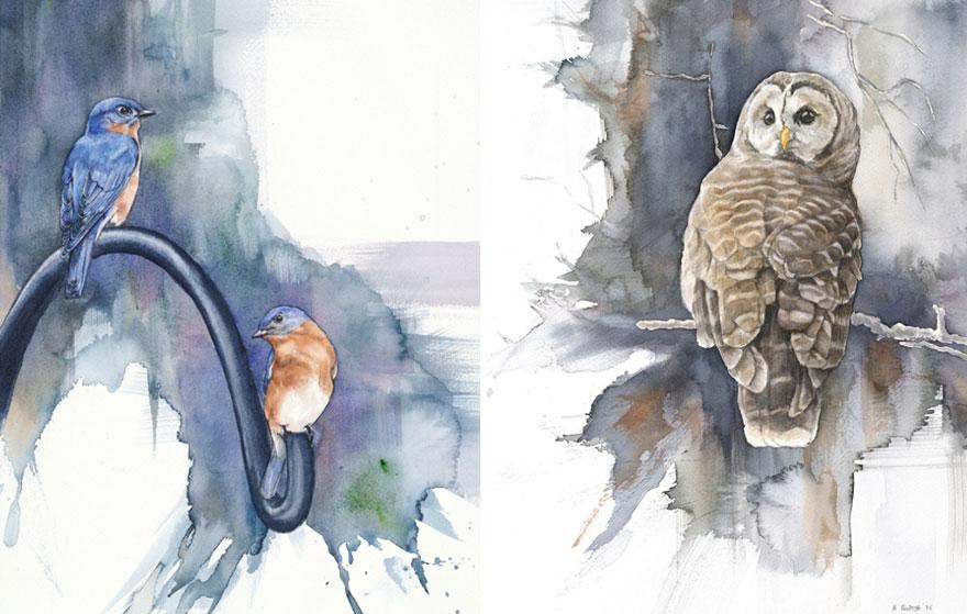acquerelli-uccelli-anne-balogh-1