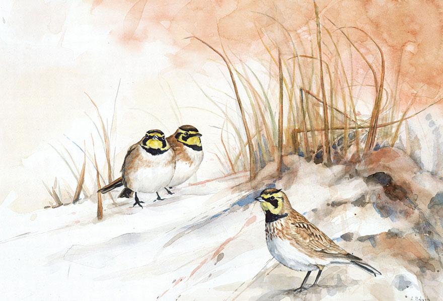 acquerelli-uccelli-anne-balogh-3