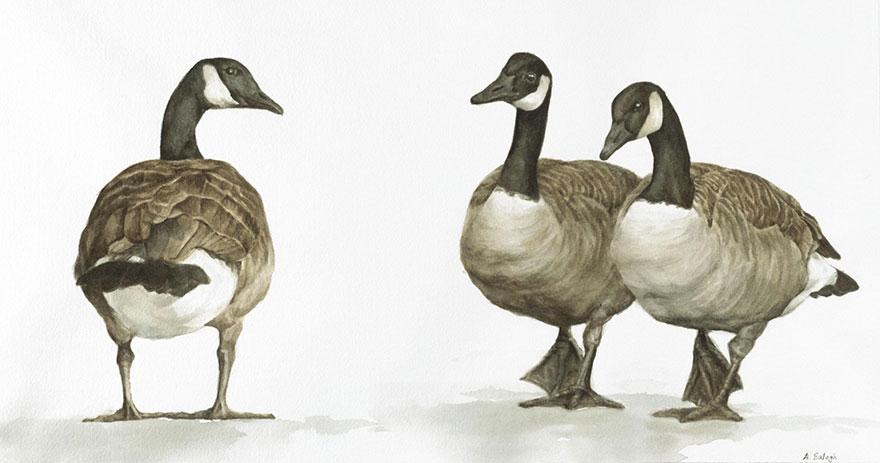 acquerelli-uccelli-anne-balogh-5
