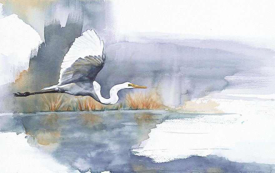 acquerelli-uccelli-anne-balogh-7