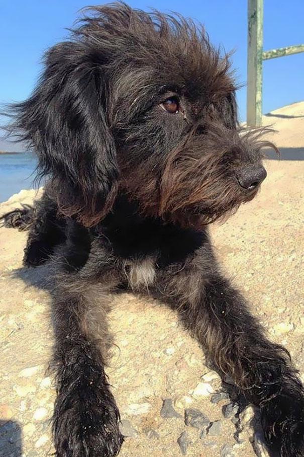 adotta-cane-randagio-salva-donna-da-assalitori-creta-georgia-bradley-3