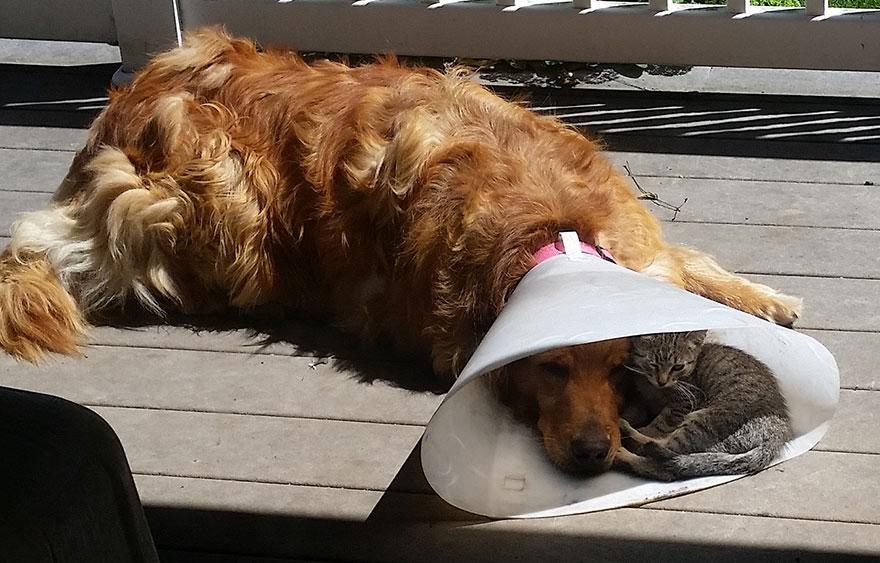 amicizia-cane-gatto