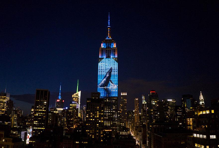 animali-pericolo-estinzione-immagini-proiettate-empire-state-building-new-york-01