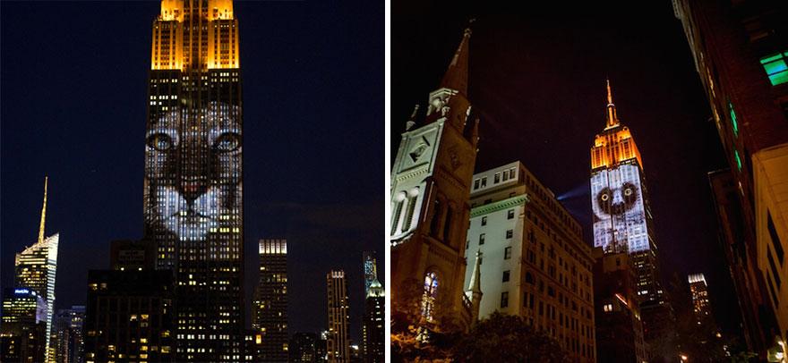 animali-pericolo-estinzione-immagini-proiettate-empire-state-building-new-york-06