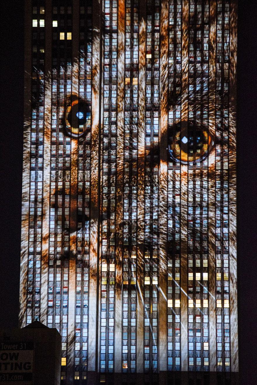 animali-pericolo-estinzione-immagini-proiettate-empire-state-building-new-york-08