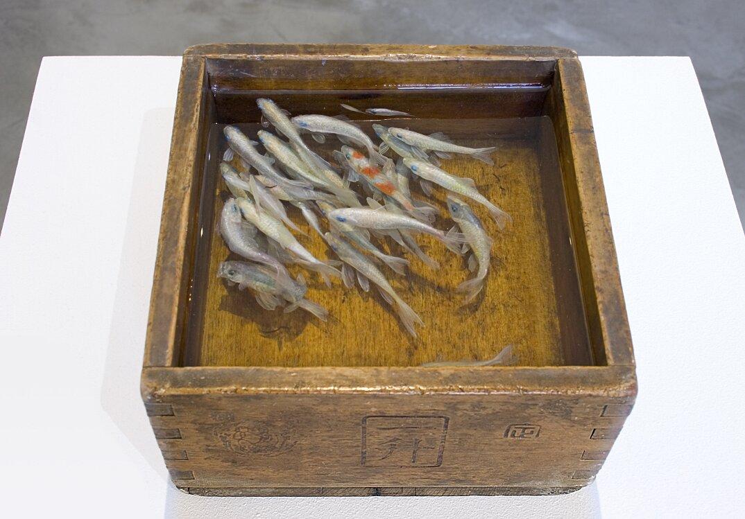 arte-iperrealistica-pittura-scultura-pesci-rossi-resina-riusuke-fukahori-1