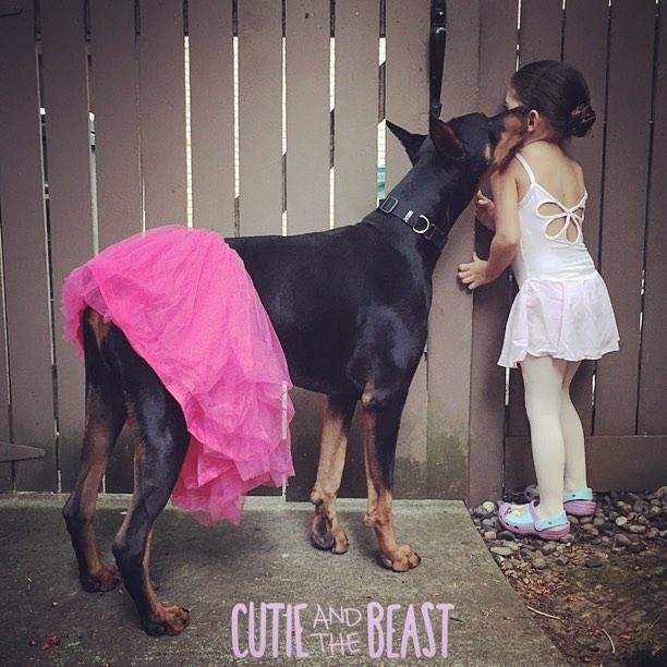bambina-dobermann-cutie-and-the-beast-cane-buddah-siena-10