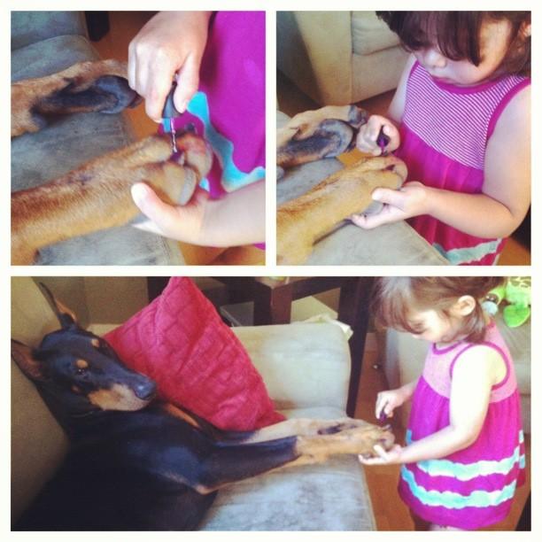 bambina-dobermann-cutie-and-the-beast-cane-buddah-siena-13