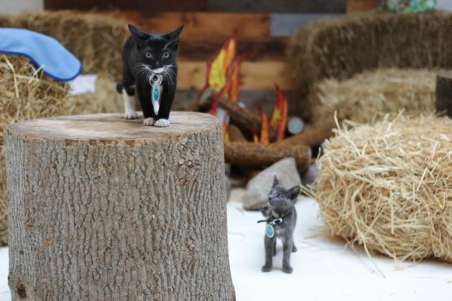 campeggio-per-gatti-educativo-cat-camp-new-york-01