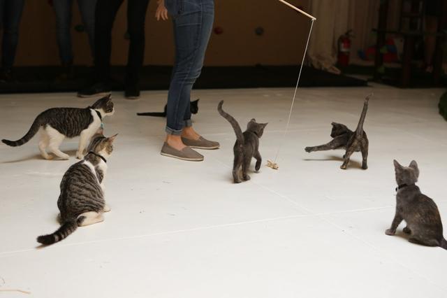 campeggio-per-gatti-educativo-cat-camp-new-york-03