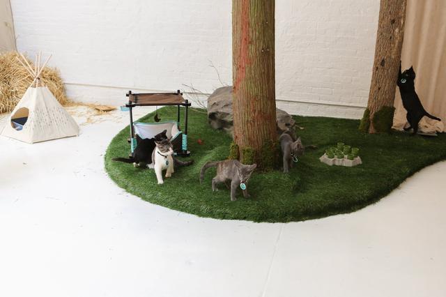 campeggio-per-gatti-educativo-cat-camp-new-york-04