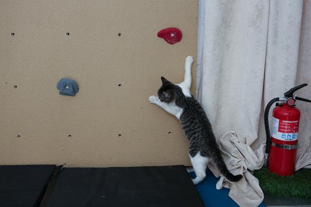 campeggio-per-gatti-educativo-cat-camp-new-york-05