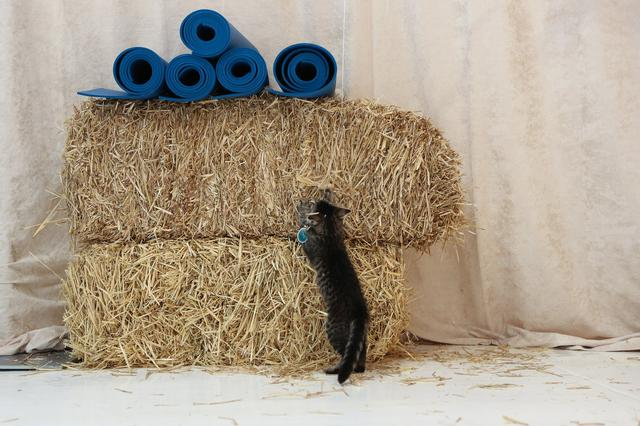 campeggio-per-gatti-educativo-cat-camp-new-york-06