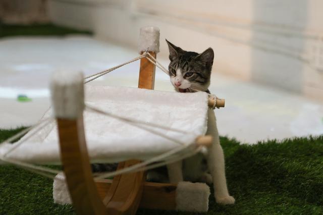 campeggio-per-gatti-educativo-cat-camp-new-york-07