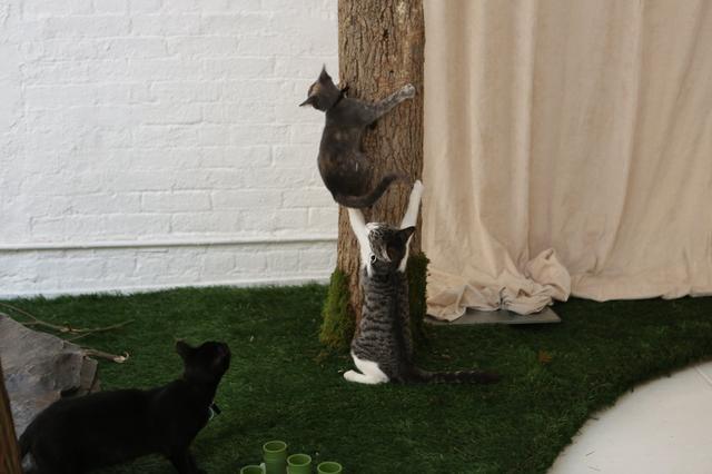campeggio-per-gatti-educativo-cat-camp-new-york-09