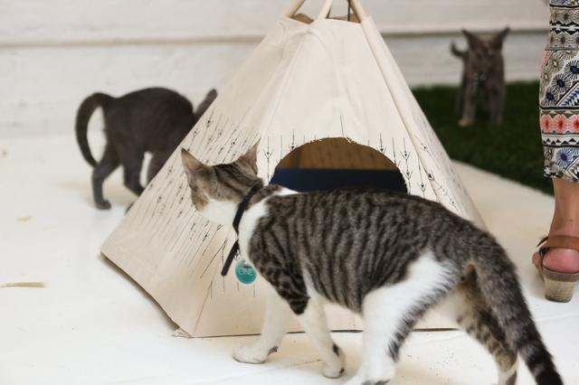 campeggio-per-gatti-educativo-cat-camp-new-york-10