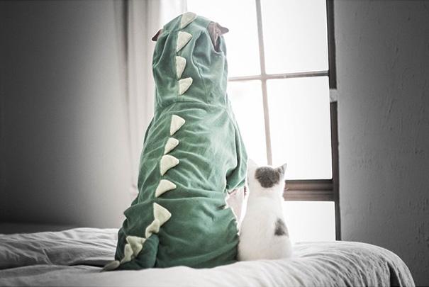 cane-shar-pei-paddington-amicizia-gatto-butler-annie-01